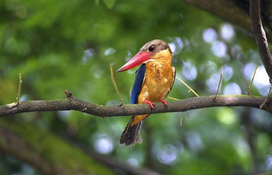 bird watching cruise in goa,cruises in goa