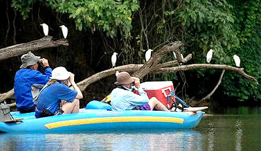 Birdwatching Trips in Goa