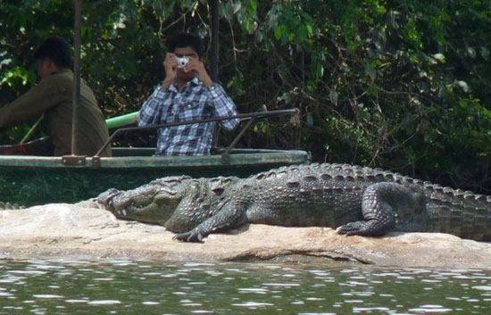 crocodile spotting in goa,cruises in goa