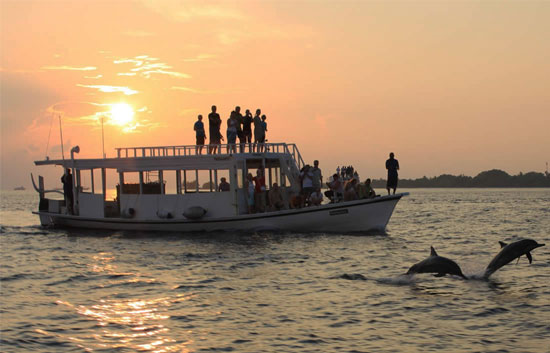 dolphin trips in goa,cruises in goa