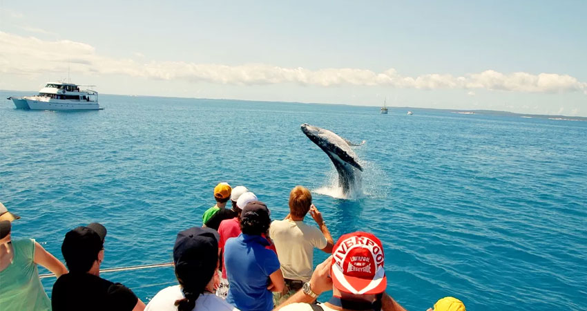 dolphin trip in goa, cruises in goa